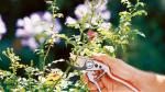 Ножица GARDENA Classic за издънки и цветя /Диаметър на рязане 20мм/
